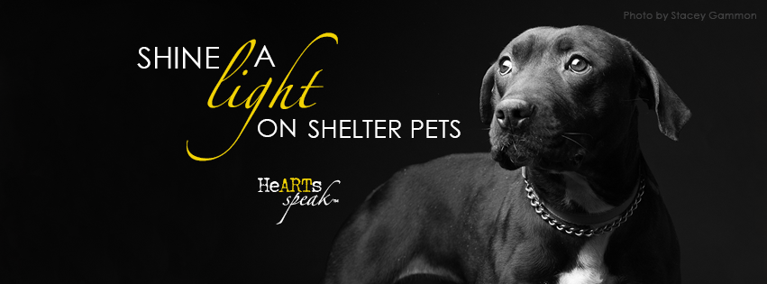 Shine a Light on Shelter Pets