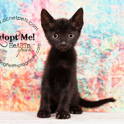 Free Cat & Kitten Adoptions | Kittenzilla at Orange County Animal Services