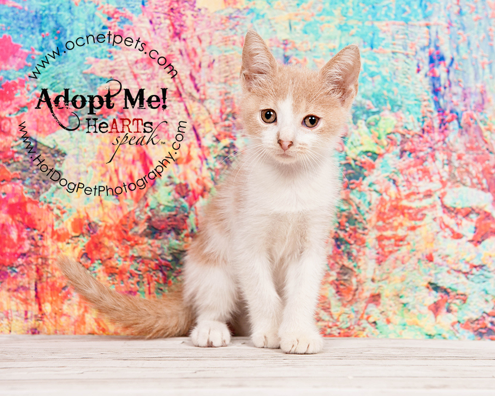 Kittenzilla at Orange County Animal Services