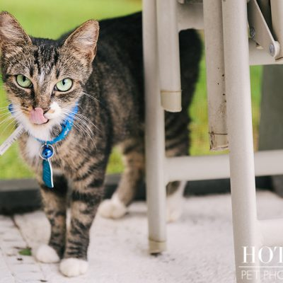 Alice | Avalon Park Stray Cat