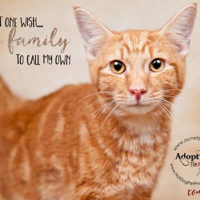 A Home for the Holidays | Adoptable Cats
