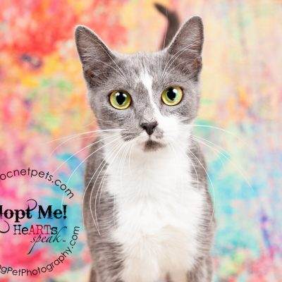 Furever Love February 1-14 Adoption Promo