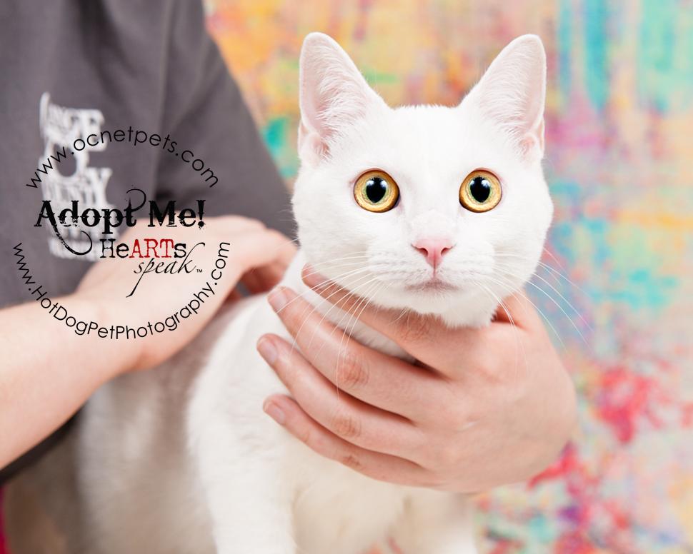 Furever Love February 1-14 Adoption Promo