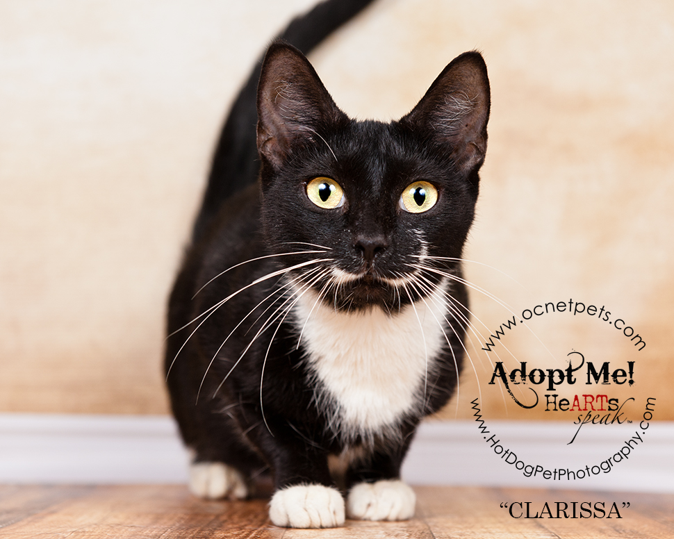 Adopt a Senior Pet Month | Cats in Orlando, FL