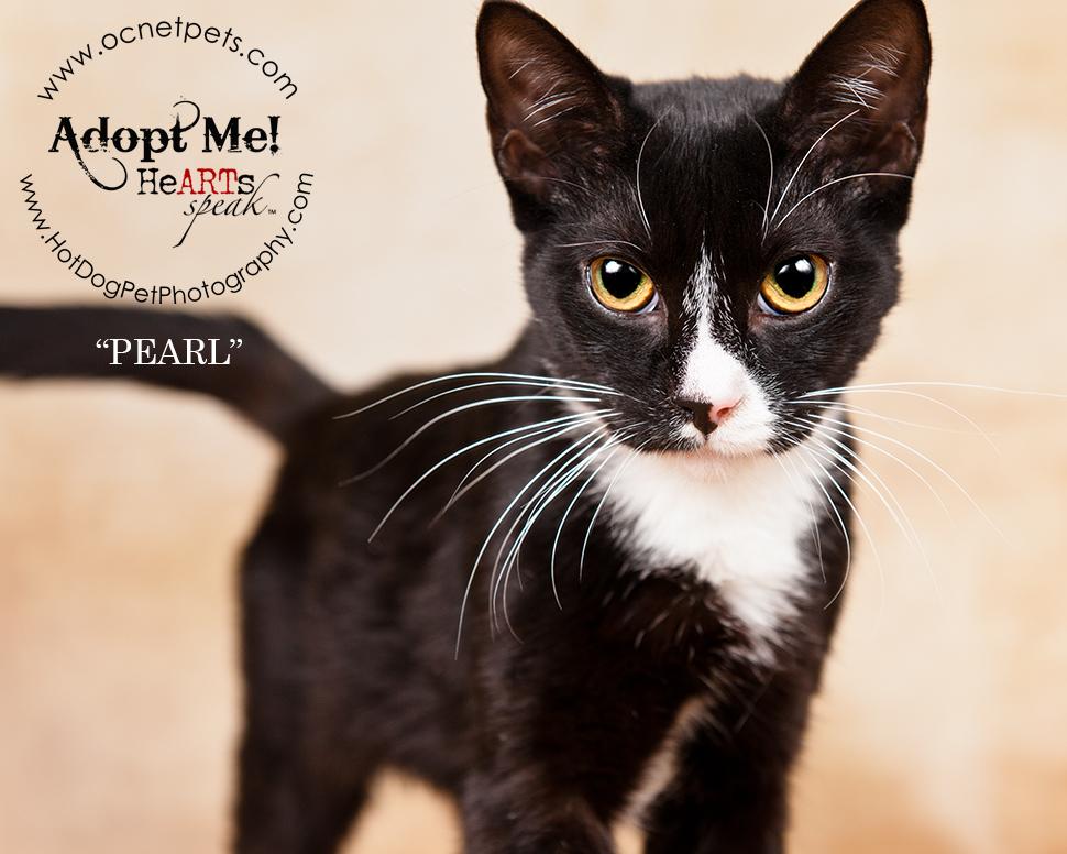 Adopt a Senior Pet Month | Cats in Orlando, FL