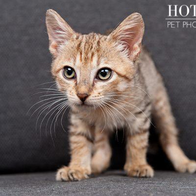 Milkshakes, Mandy & Grim | Adoptable Kittens