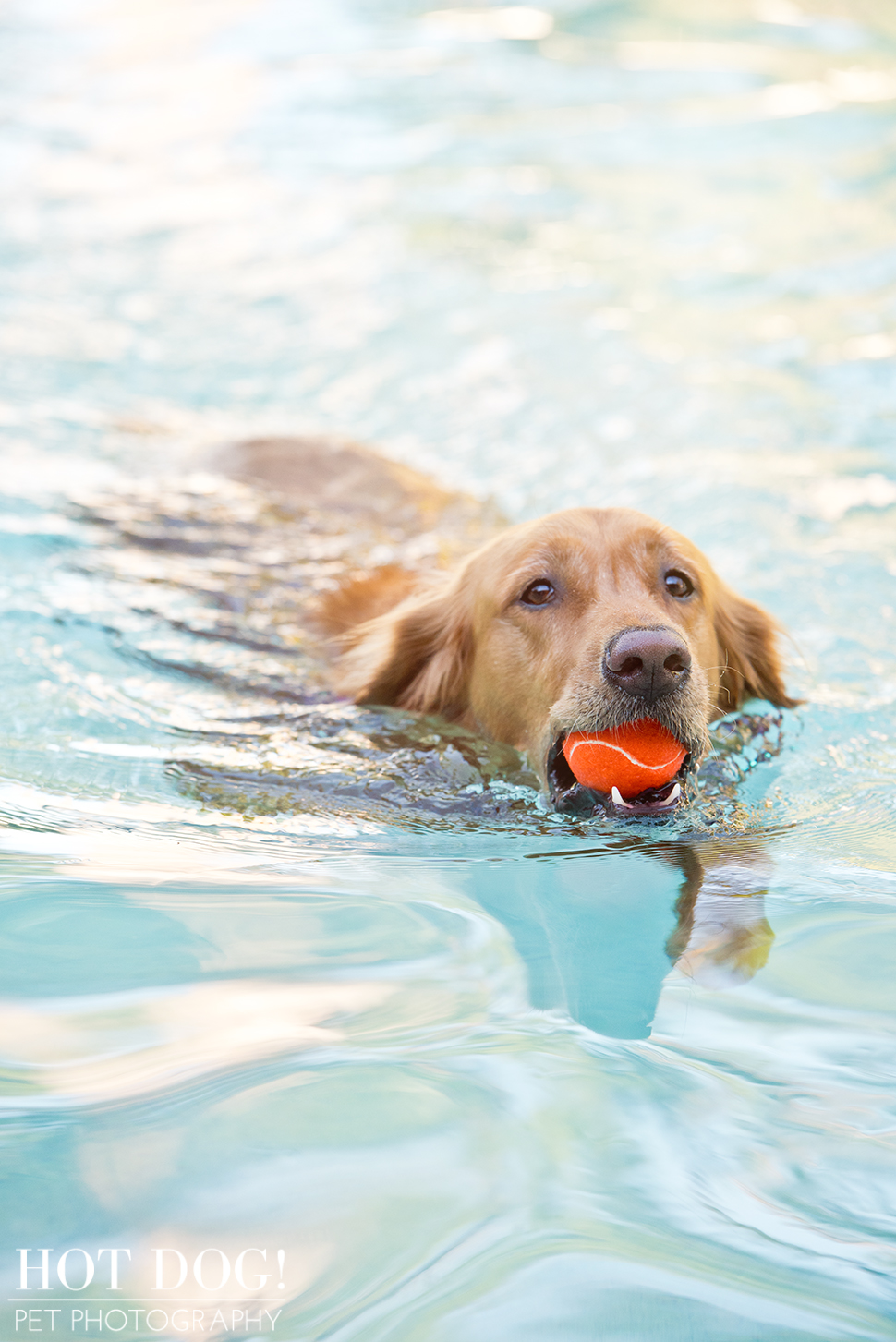 Leo, Luke & Colby the Water-Loving Pups | Casselberry Pet Photography