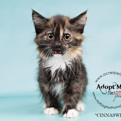Military Family Appreciation Month | Adoptable Cats in Orlando
