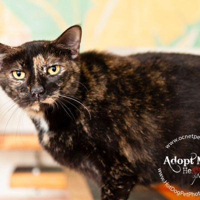 Cat Adoptions for $20.15 at OCAS | Orlando Shelter Photography