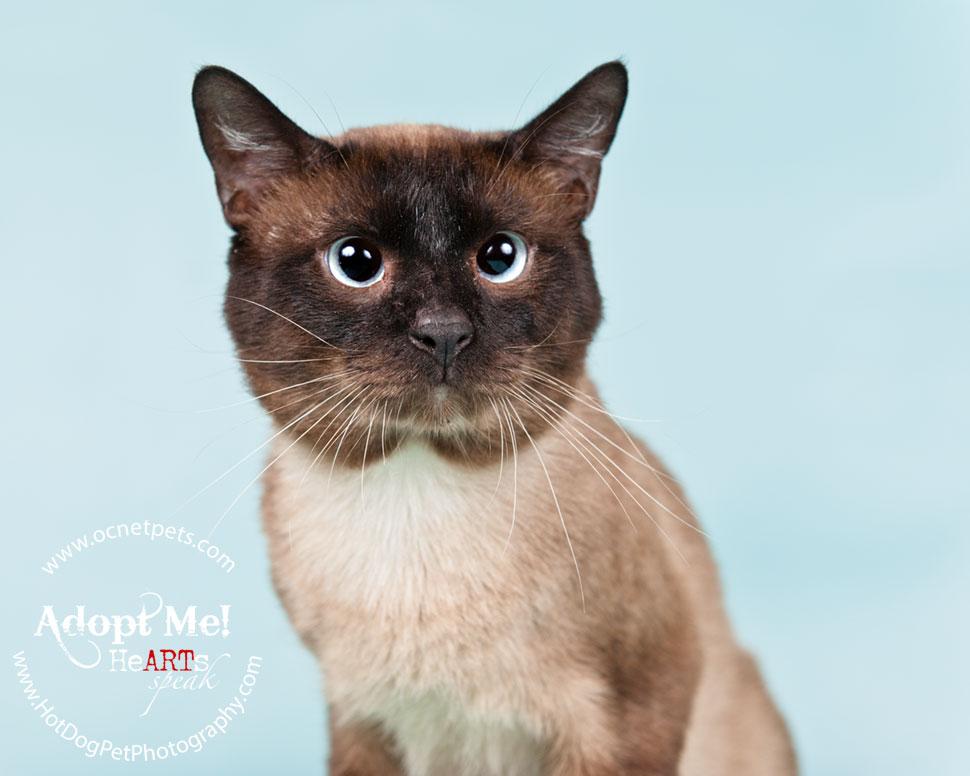 Cat Adoptions for $20.15 and BOGO   Orlando Shelter Photography