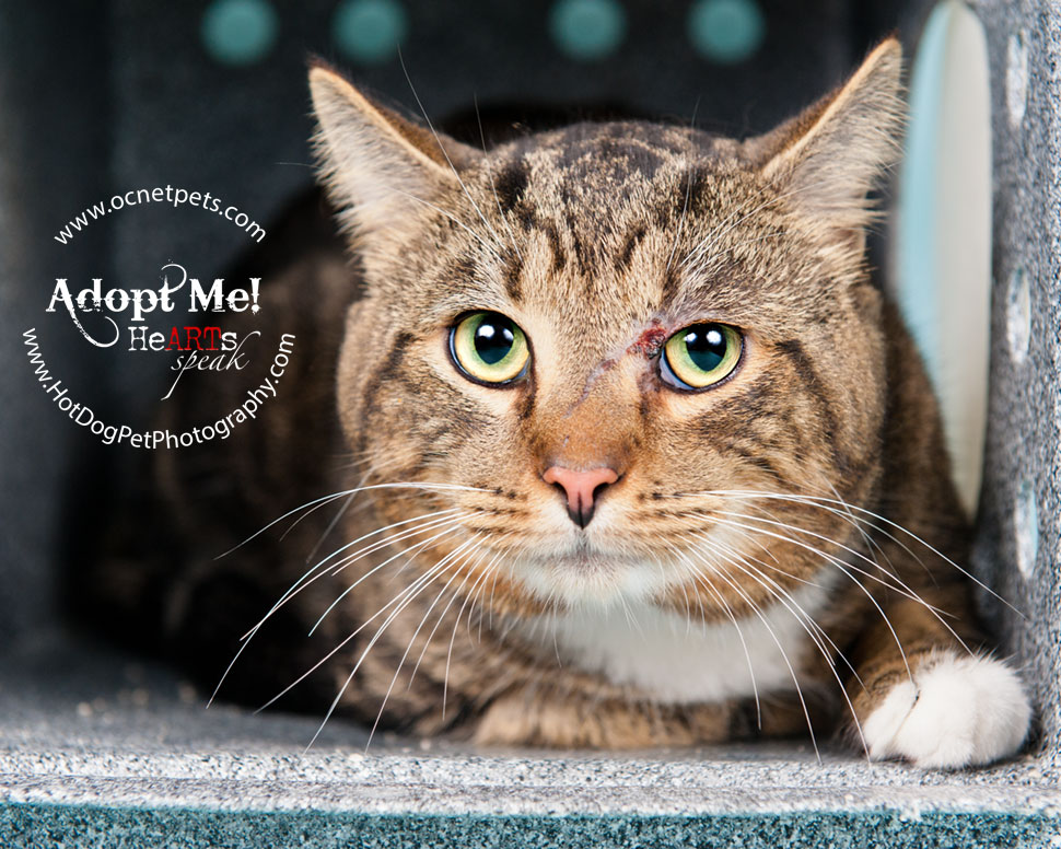 Cat Adoptions for $20.15 and BOGO | Orlando Shelter Photography