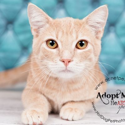 April Microchip Mania | Orlando Adoptable Cats