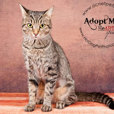 Adoptable Cats at Orange County Animal Services | October 2016