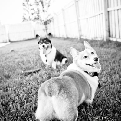 Ginger and Snap | Orlando Dog Photography
