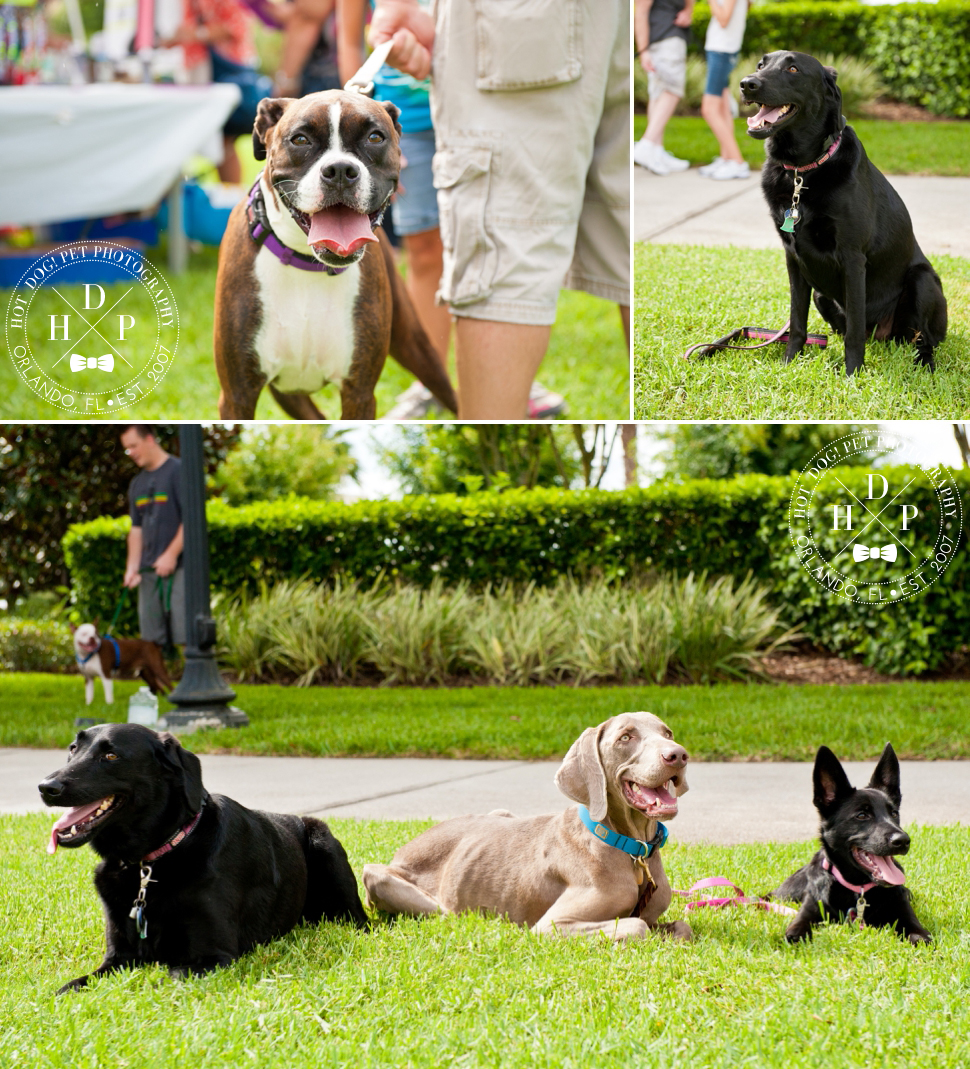 Bark in Avalon Park | Community Dog Walk Event