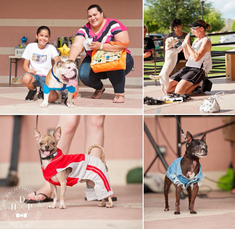 Bark in Avalon Park   Community Dog Walk Event