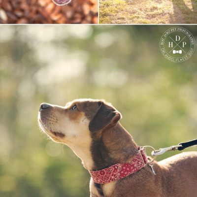 Bandit | Orlando Dog Photography