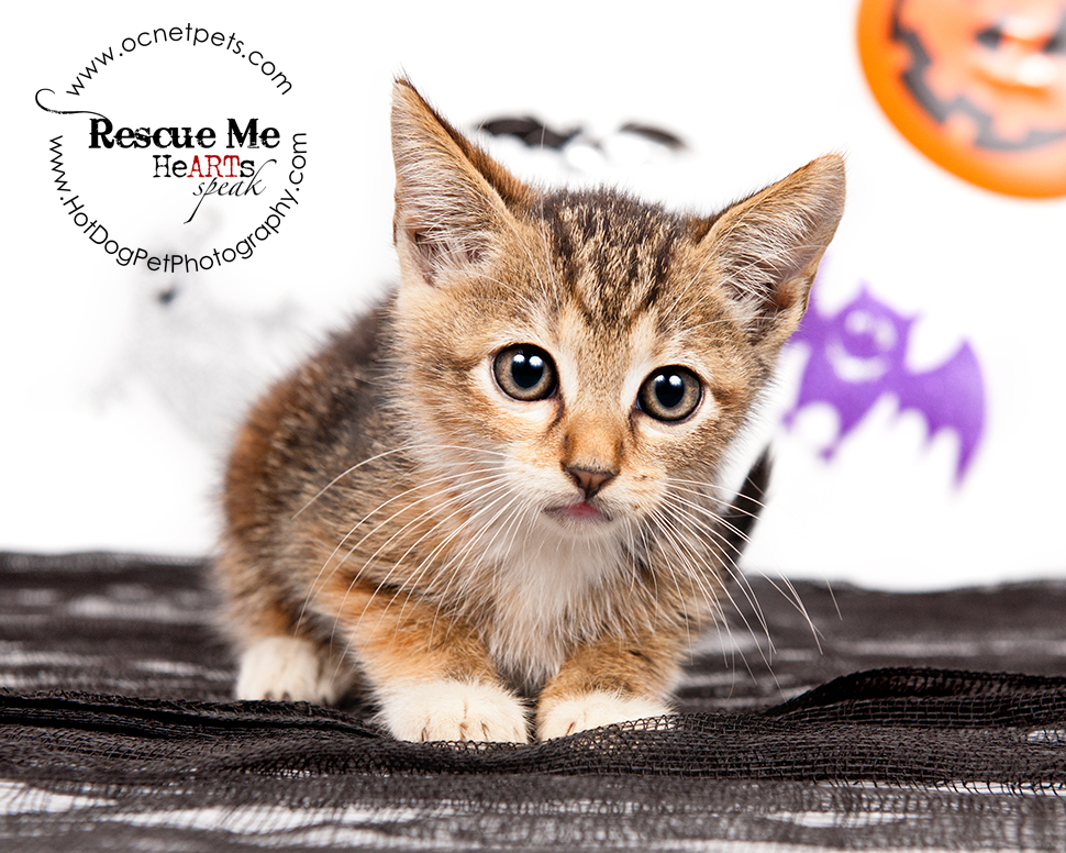 Cat Spooktakular | Adoptable Cats in Orlando, Florida