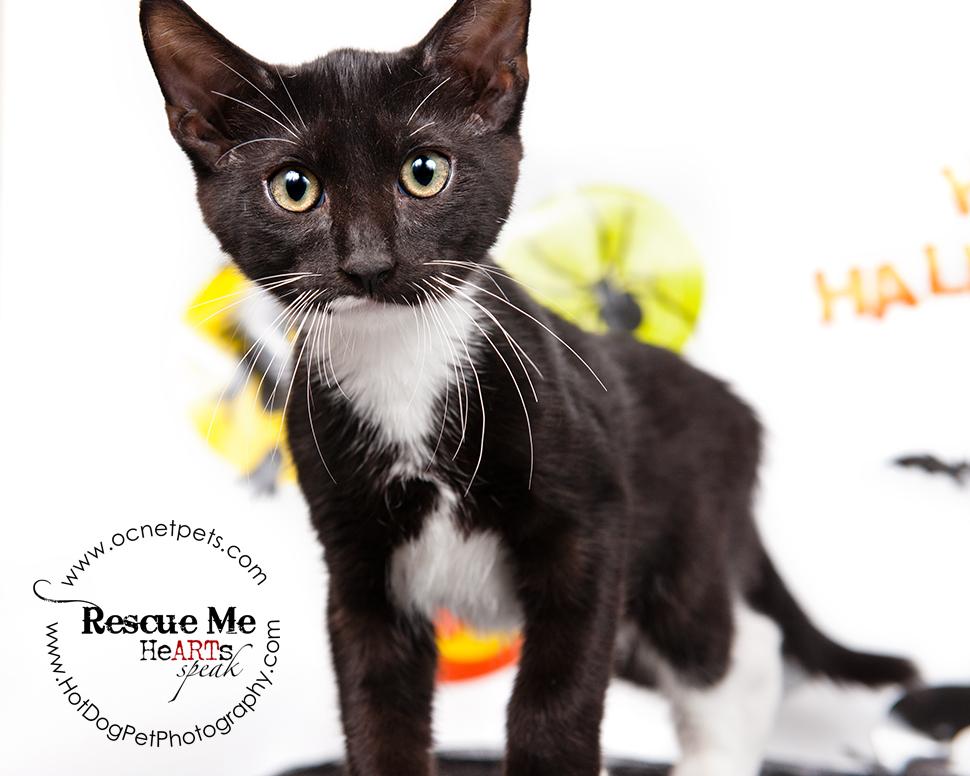 Cat Spooktakular | Adoptable Cats in Orlando, Florida