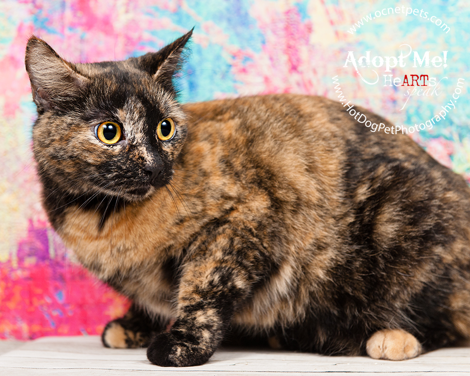 Luck of the Paw | Adoptable Cats in Orlando