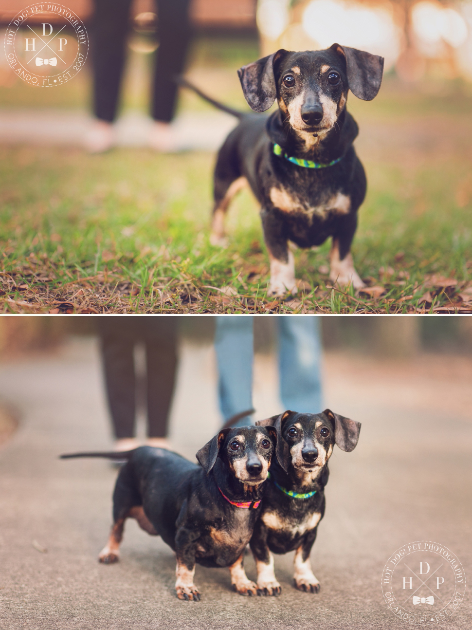 Sadie & Sawyer | East Orlando Pet Photography