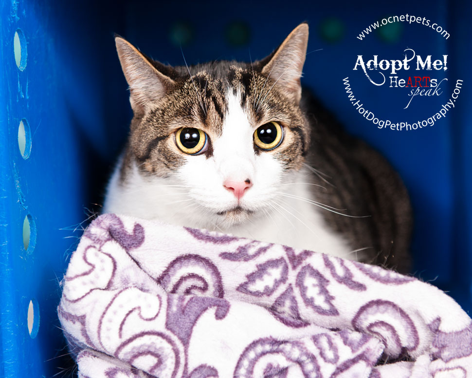 $12 Adoptions for December   Adoptable Cats in Orlando