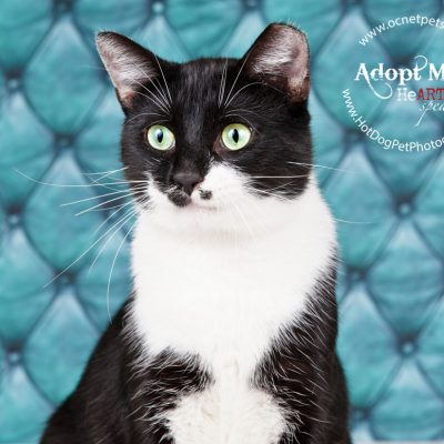 $12 Adoptions for December | Adoptable Cats in Orlando