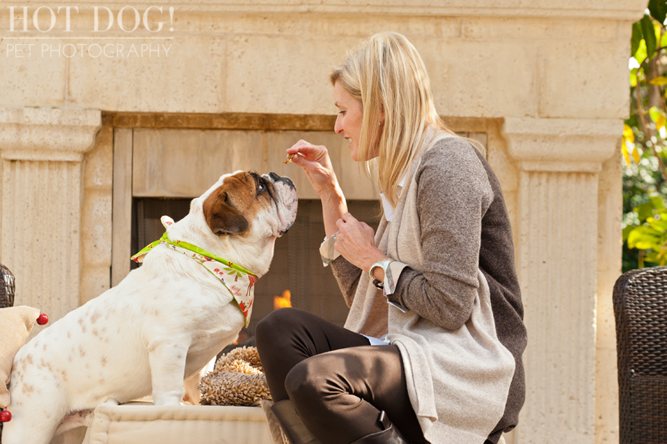 Diesel & Padrone the Bulldogs | Windermere Pet Photography