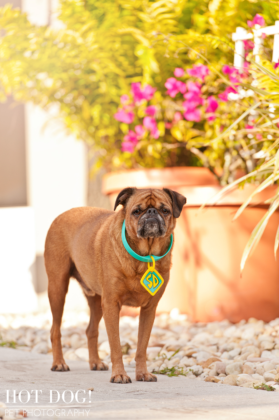 National Brussels Griffon Rescue