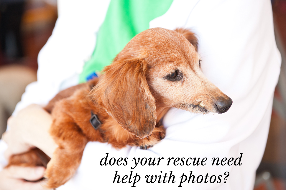 how to help rescue animals
