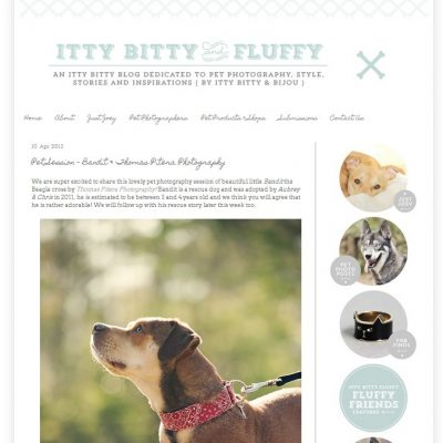 Featured – Itty Bitty and Fluffy – Bandit