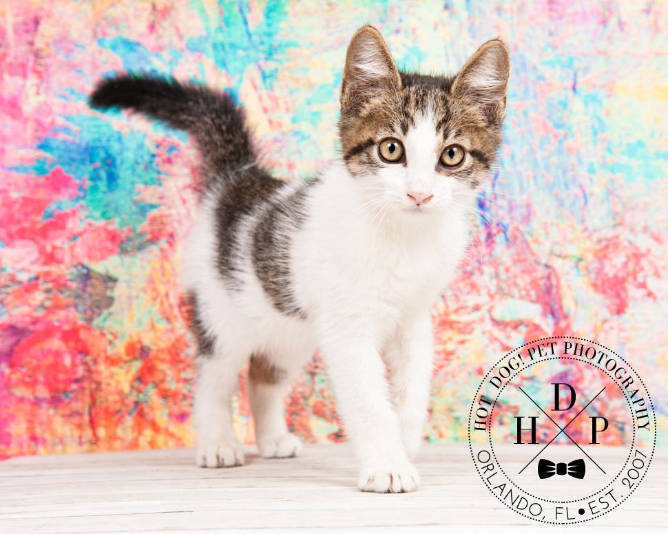 Adoptable Cats in Orlando