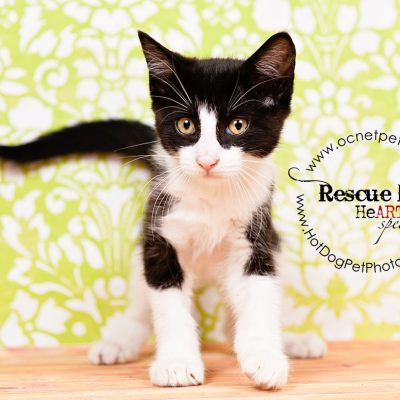May's Adoptable Cats | Orange County Animal Services
