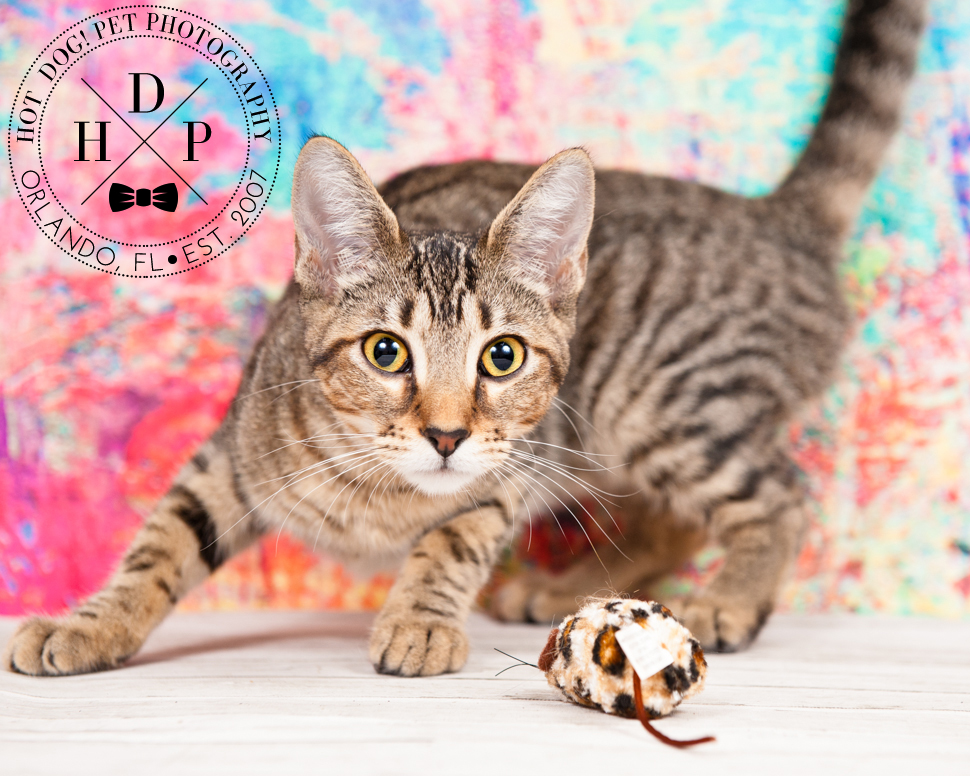 Adoptable Cats in Orlando