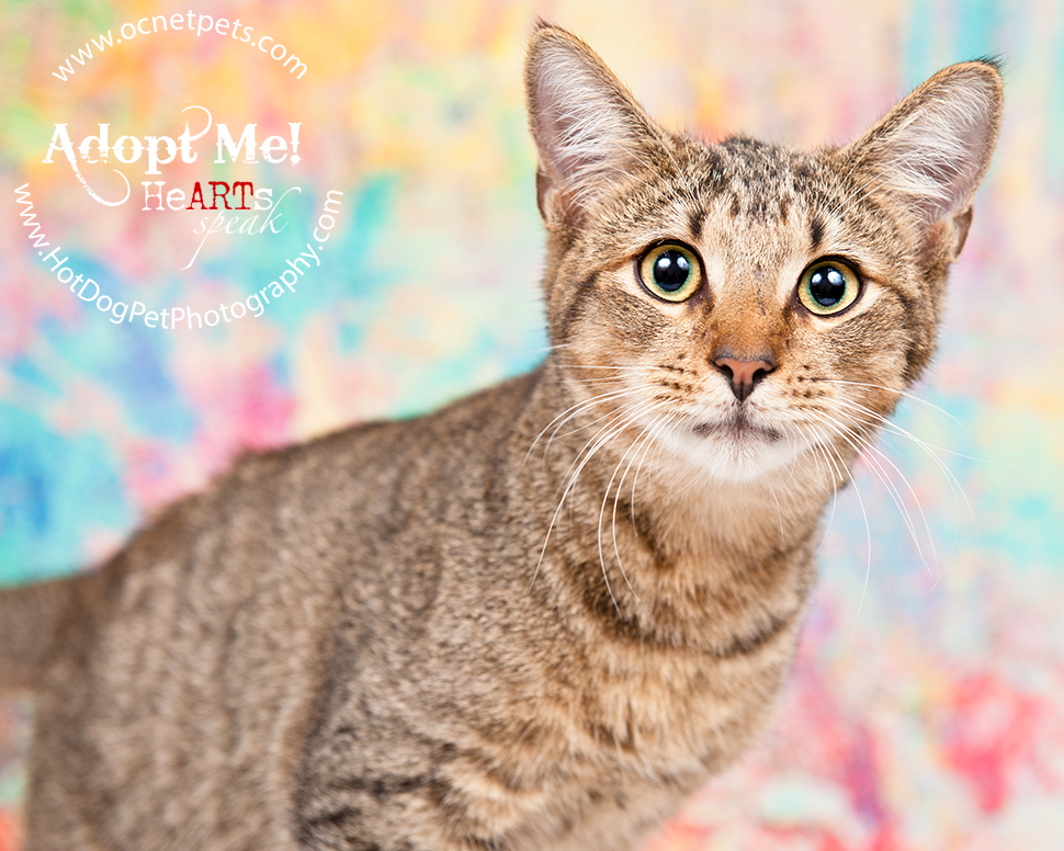 Adoptable Cats Photographed by Hot Dog! Pet Photography Orlando Florida