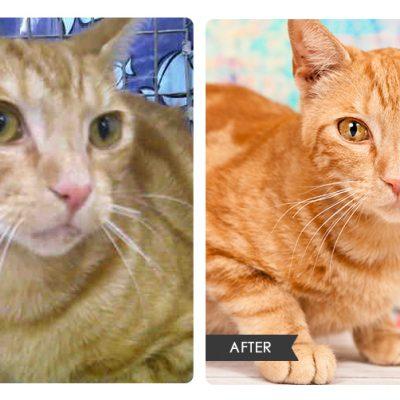 Cat Rescue Portraits | Orlando Pet Photography