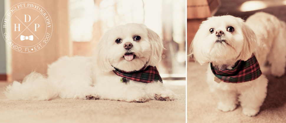 Longwood Pet Photography by Hot Dog! Pet Photography