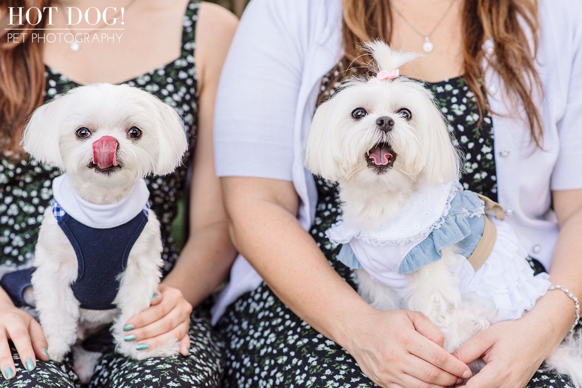 Charlie & Lola the Maltese | Orlando Pet Photography