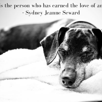 Cherished Companions | Senior Pet Photography