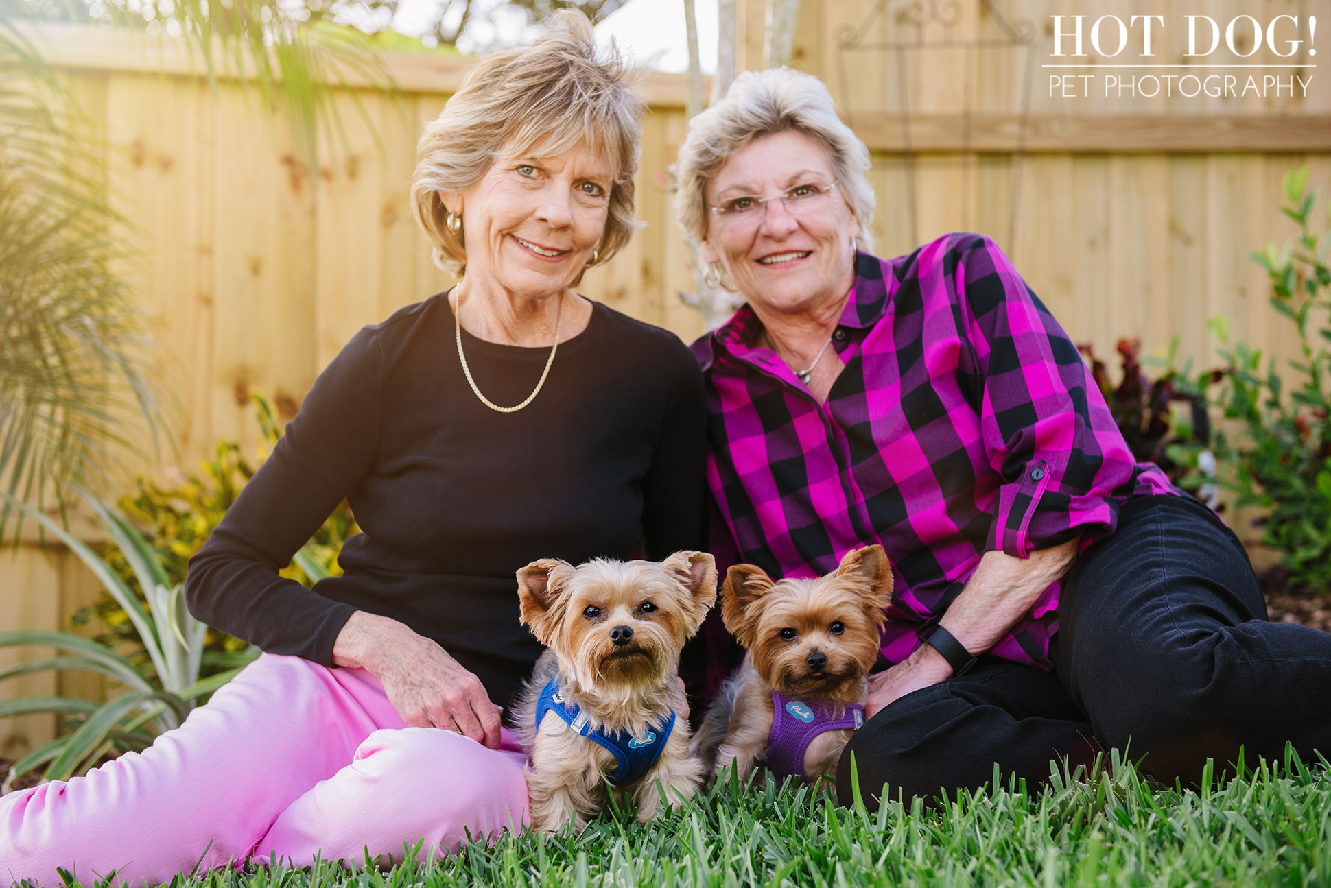 Choppie & Sweet Pea the Yorkies | Orlando Pet Photography