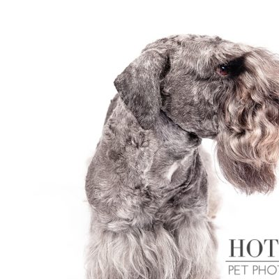 Dog of the Day | Cesky Terrier