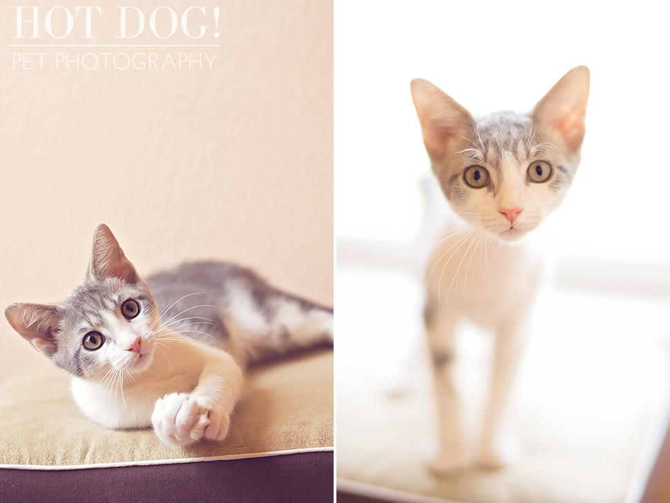 Gus | Orlando Pet Photographer