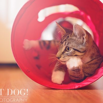 Jack | Orlando Pet Photographer