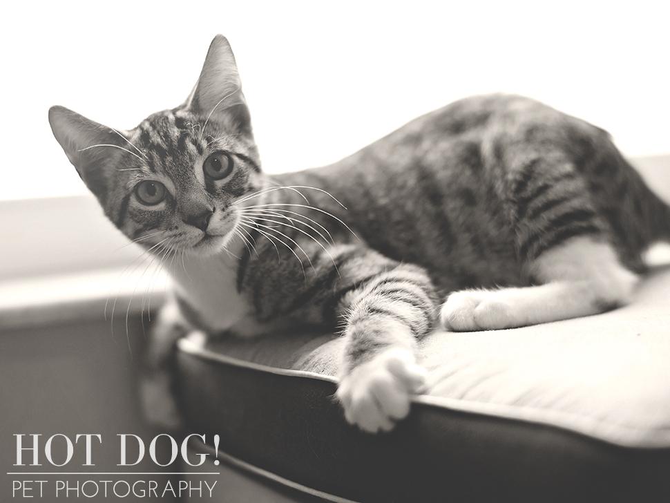 Jack | Orlando Pet Photographer