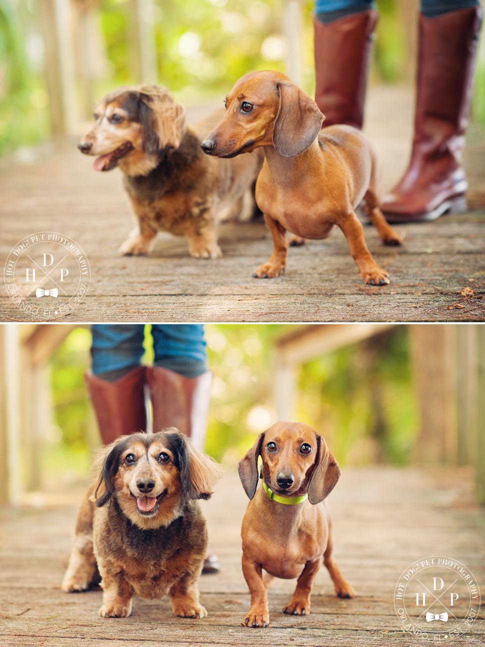 Winter Park Pet Photography