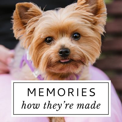 Hot Dog! Pet Photography Makes Memories