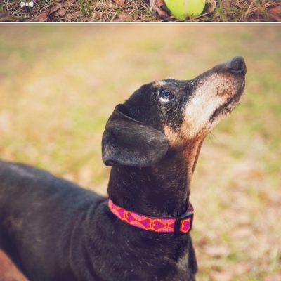 Rescue Portraits | Orlando Pet Photography
