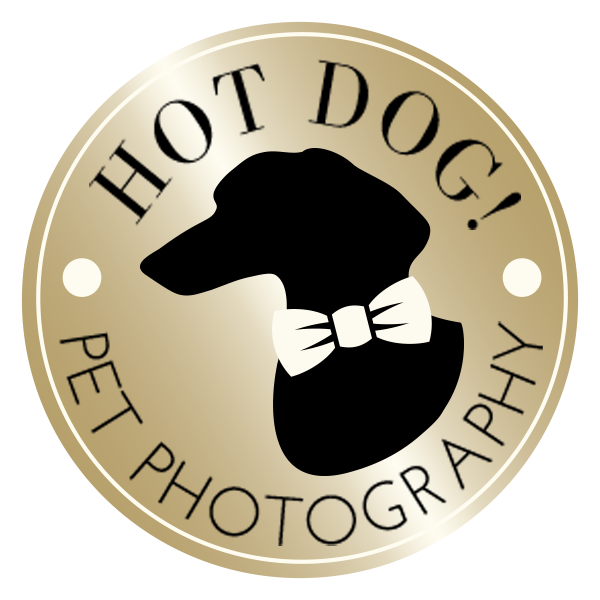 Hot Dog! Pet Photography