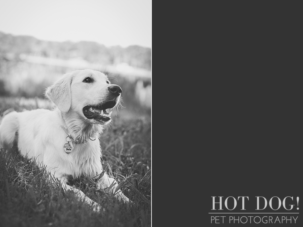 Sula | Orlando Pet Photography